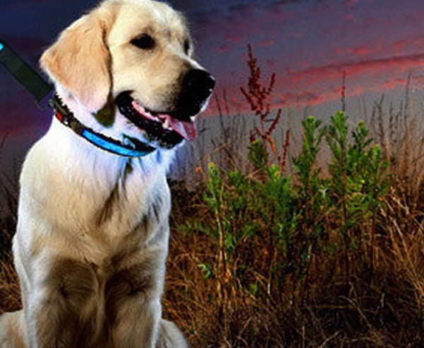 Hi-Tech LED Dog Collar