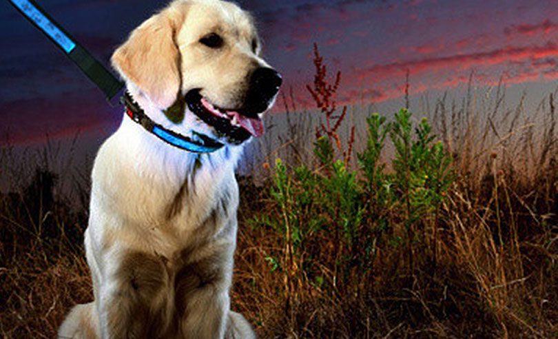Hi-Tech LED Dog Collar