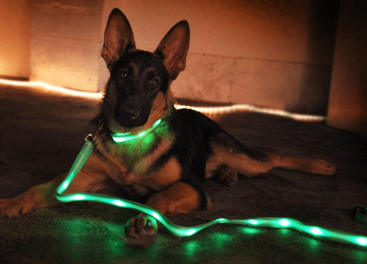 Tech Wear for Your Pets